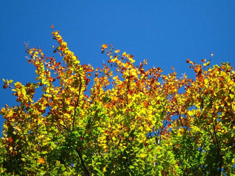Zlatorumene jesenske barve
