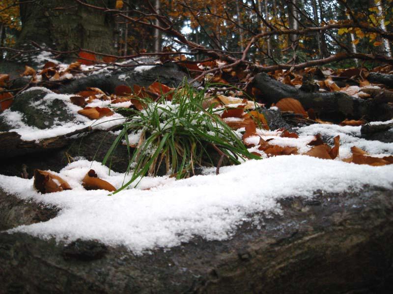 Prvi sneg ... sicer sramežljiv ...