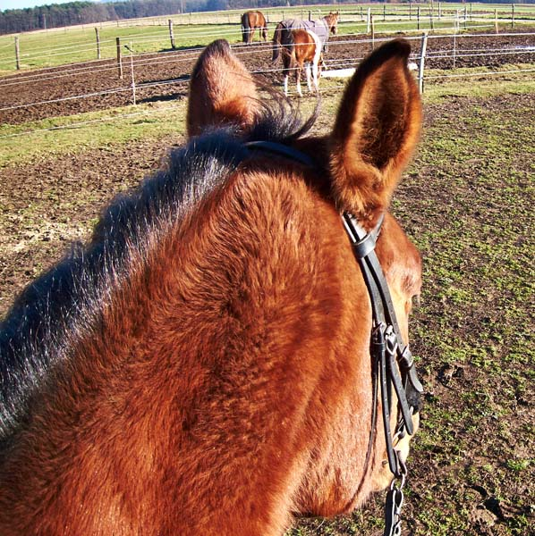 S konja